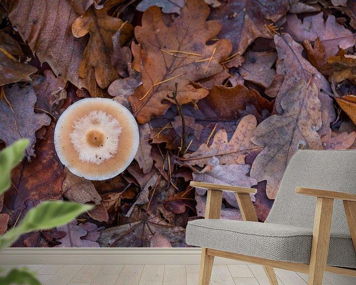 Beispiel fototapete: Pilz von Tim Briers