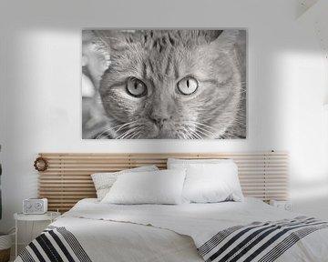 Nahaufnahme der befragenden Katzenaugen von J..M de Jong-Jansen