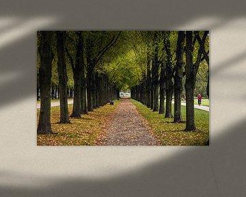 Traumhafte Allee mit fallenden, bunten Blättern im Herbst von Fabian Bracht