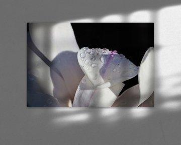 Magnolienblatt mit Tropfen von Marieke Funke