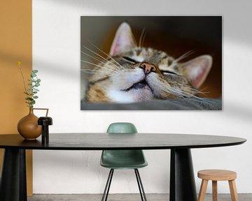 Zypriotische Katze von Marieke Funke
