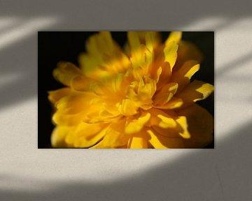 Gelbe Blume in Nahaufnahme von Marieke Funke