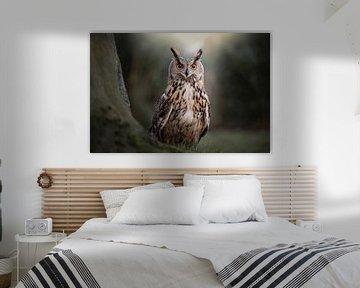 Kuckuckskauz im Wald von Aisa Joosten
