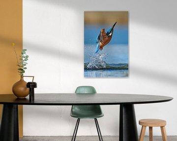 IJsvogel - Mis van IJsvogels.nl - Corné van Oosterhout