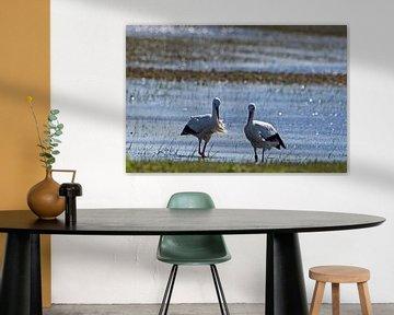 Storch-Paar von EFFEKTPHOTOGRAPHY.nl