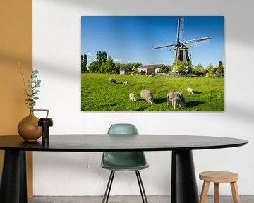 Moulin à vent avec des moutons sur Coen Weesjes