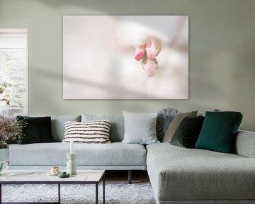 Blütenknospen im Frühling von Cathy Roels