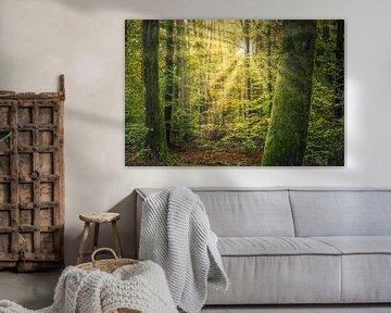 Une forêt verte dans la lumière du matin