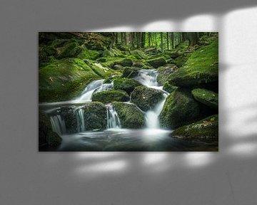 Petite chute d'eau dans la forêt verte