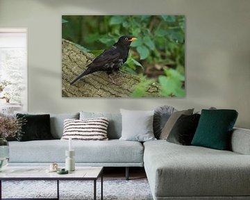 Amsel ( Turdus merula ), bekannter heimischer Singvogel sitzt auf einem umgefallenen Baum. von wunderbare Erde