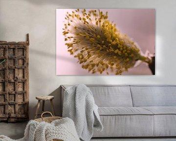 Makrofotografie einer blühenden Weidenkatze von JM de Jong-Jansen