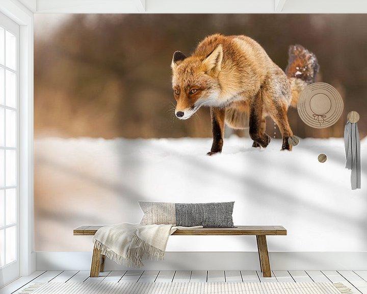 Beispiel fototapete: Fox im Angriff von Marcel Derweduwen