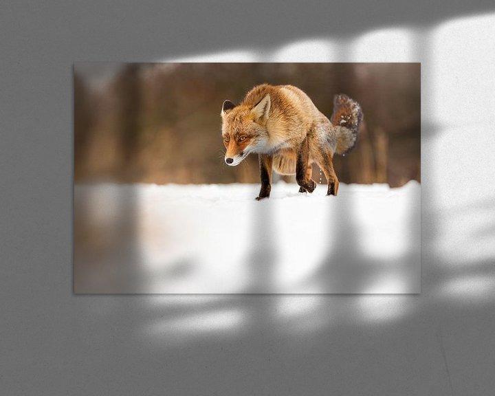 Beispiel: Fox im Angriff von Marcel Derweduwen