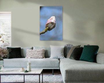rosa Blume zum Baum von Jeffry Clemens