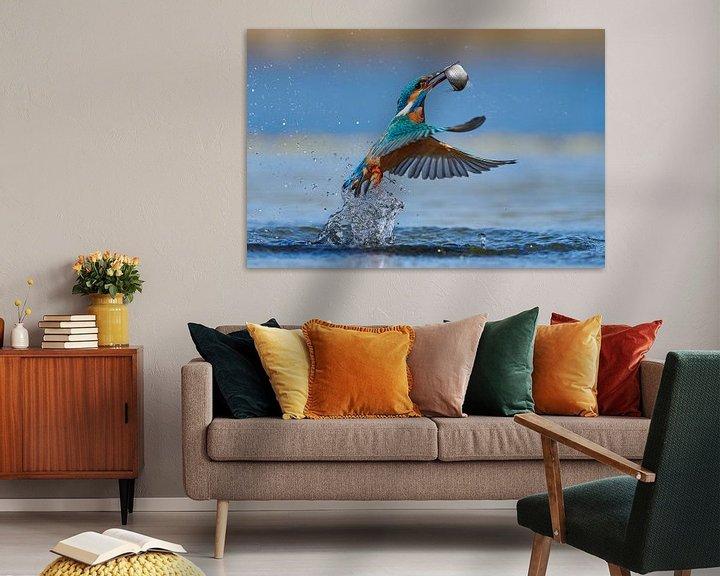 Beispiel: Eisvogel - Im Handumdrehen von IJsvogels.nl - Corné van Oosterhout