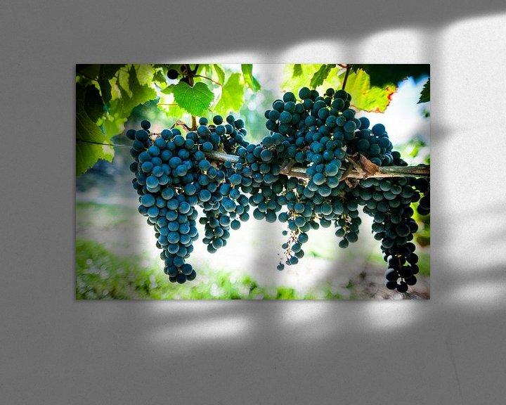 Sfeerimpressie: Wijngaard van Stefan Witte