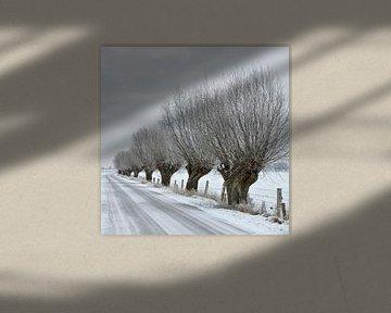 Knorrige Kopfweiden ( Salix sp. ) säumen eine alte Landstraße auf der Bislicher Insel am Niederrhein von wunderbare Erde