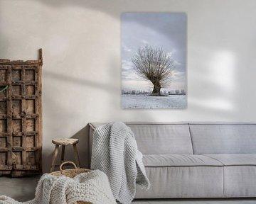 Oude knoestige boom (knotwilg, Salix P.) aan de Nederrijn, Bislicher Insel, Noordrijn-Westfalen, Dui van wunderbare Erde