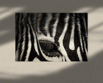 zebra oog close-up van Ed Dorrestein