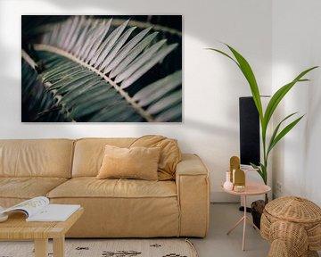 Nahaufnahme einer Palmenpflanze von Sabine Keijzer