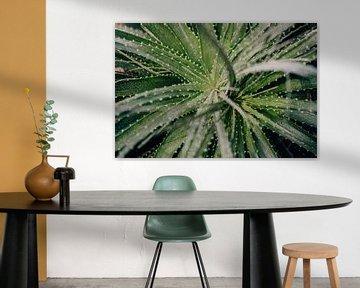 Aloe Vera-Pflanze von Sabine Keijzer