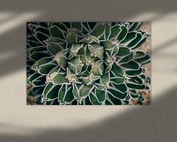 Agave plant van Sabine Keijzer