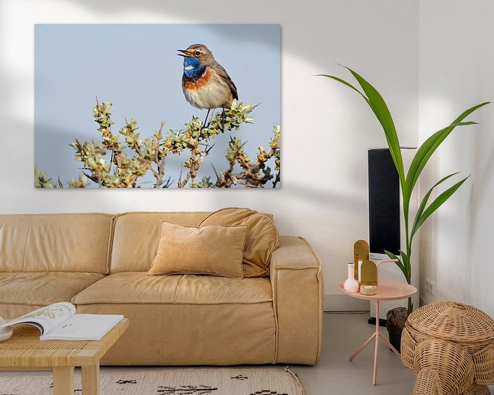 Sfeerimpressie: Blauwborst ( Luscinia svecica ), een van de mooiste inheemse zangvogels, wilde dieren, Europa. van wunderbare Erde