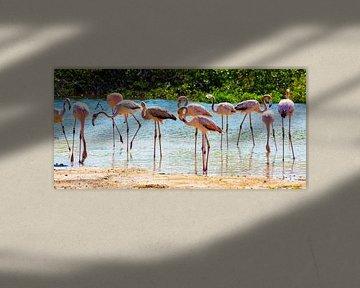 Jonge  Flamingo's op Bonaire van Michel Groen