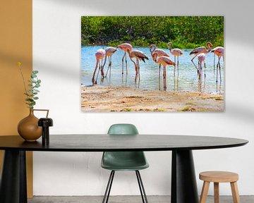 Flamingos auf Bonaire von Michel Groen