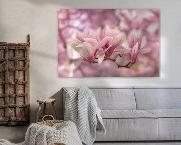 Magnolia's in zachtroze