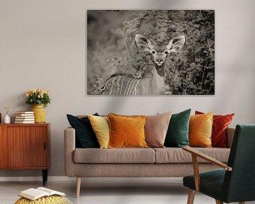 portrait d'une femme koudou
