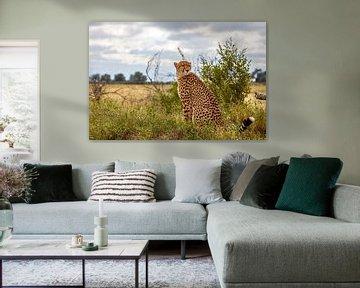 Cheetah - Portret van Ursula Di Chito