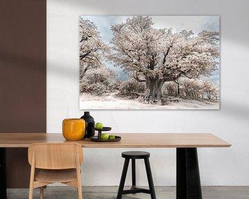 Baobab - Baum von Ursula Di Chito
