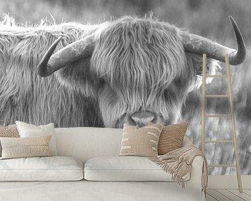 Jonge Schotse hooglander van Willeke Bijker