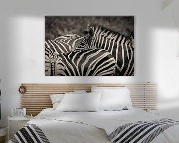 Zebra in een groep van Ed Dorrestein