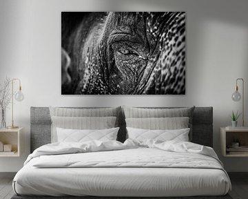 Die Seele des Elefanten (schwarz-weiß) von Joey Ploch