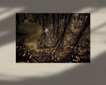 Reflexion von Wolbert Erich