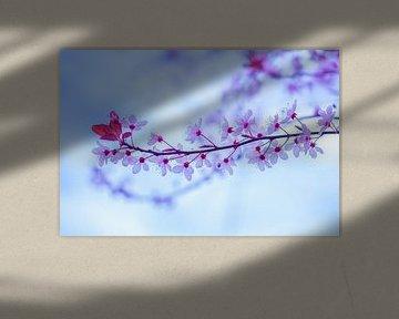 Frühlingsblüte von Linda Hanzen