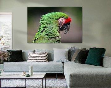 Close-up van kleurrijke Macaw van Melissa Peltenburg