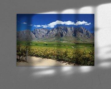 Uitzicht over wijnvelden in de Westkaap, Zuid-Afrika van Melissa Peltenburg