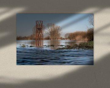 Het overstroomgebied van de Dommel in Sint Oedenrode van Gerry van Roosmalen