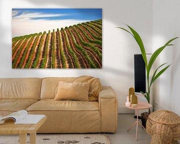 Wijnranken in Stellenbosch, Zuid-Afrika van Melissa Peltenburg