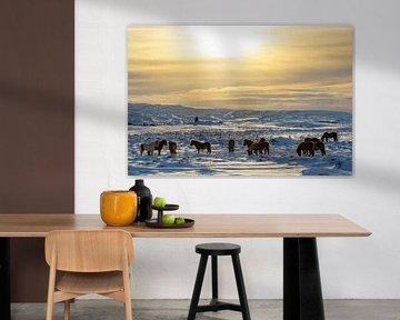 IJslandse paarden in de winter van Melissa Peltenburg