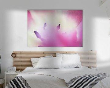 Im Herzen der rosa Tulpe, abstrakt von de buurtfotograaf Leontien