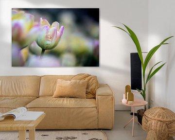 tulpen in pasteltint 1 van de buurtfotograaf Leontien