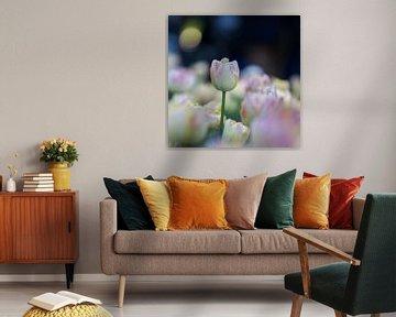 tulpen in pasteltint 4 van de buurtfotograaf Leontien