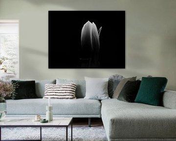 Tulipe sur Maikel Brands