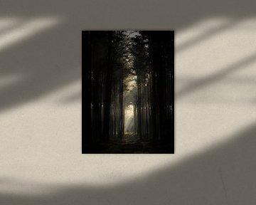 In de stralen van de zon op de bosweg