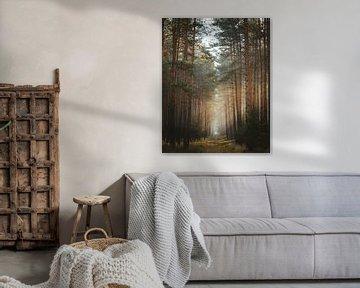 Route forestière sur Jakub Wencek