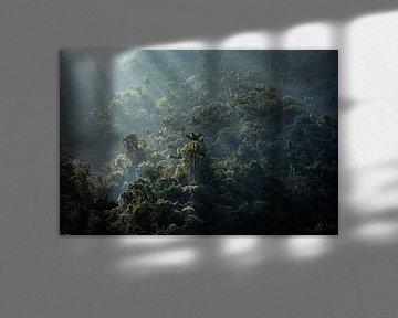 Sonnenaufgang über dem Dschungel der verlorenen Stadt in Kolumbien von Floris Heuer